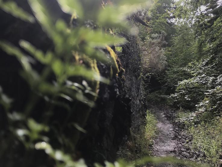 Woods of Edzell